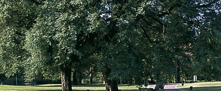 bosques-de-palermo-buenos-aires-parques-3