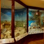 Museu da Patagônia