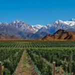Azeites e Vinícolas em Mendoza