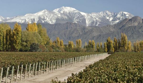 Vinícolas Mendoza Terrazas de los Andes