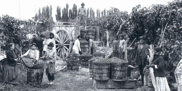 Historia dos vinhos na argentina